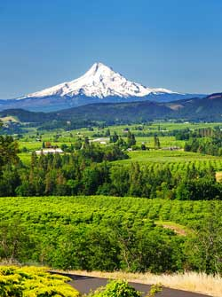 Mount Hood from Willamette Valley